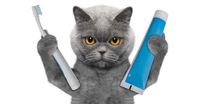 猫の抜歯手術におけるリスクと費用について