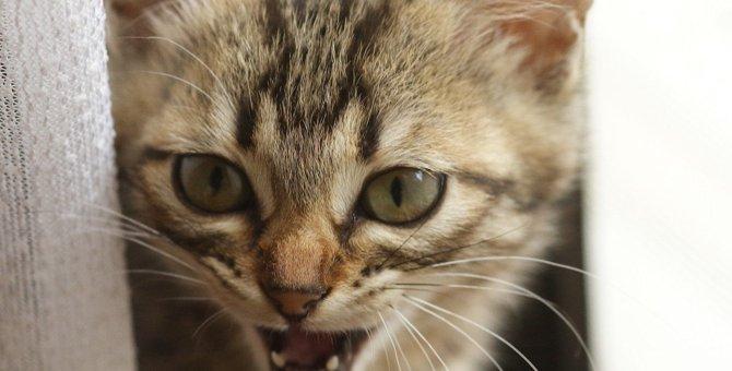 猫の『鳴き声』でわかる4つの気持ち!パターン別に飼い主がすべき対応を解説