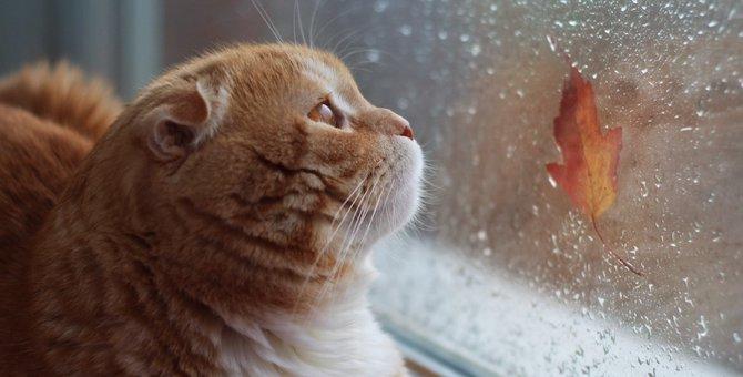 天気によって変わる猫ちゃんの気持ち