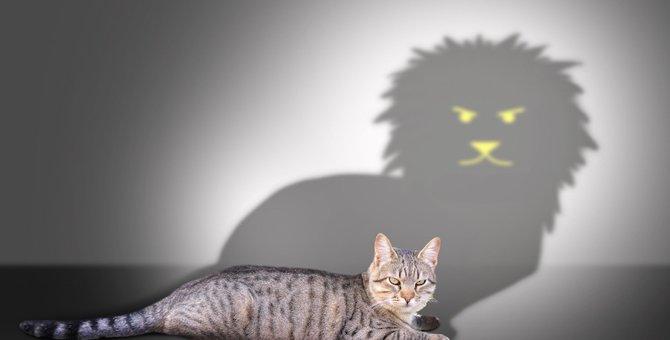 猫って勇敢!自分より大きな相手を攻撃する5つの理由