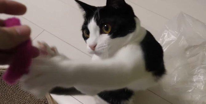 猫ちゃんのこだわり?お気に入りのオモチャはお気に入りの場所へ♪