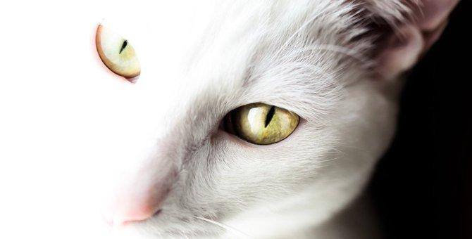 猫に復讐されてしまう飼い主のタブー行動5つ
