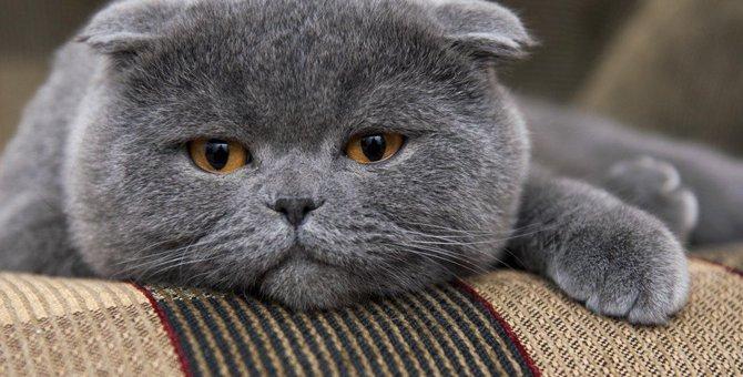 手がかかりがちな猫の品種5つ