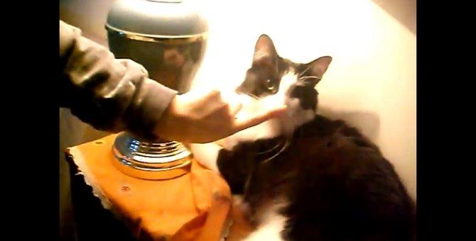 そっちがスイッチ!?猫ちゃんのお鼻を指でちょんっ!とすると…
