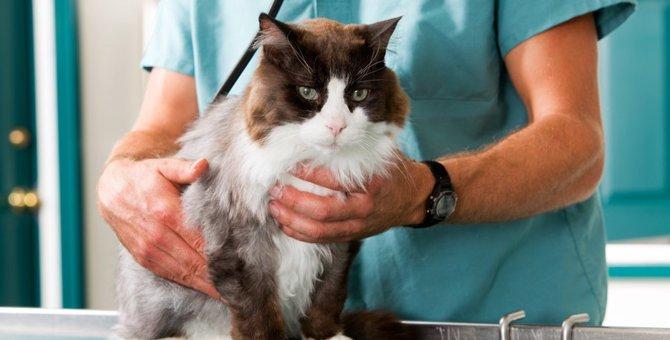 猫のスタッドテイルとは  その主な症状とケアの方法