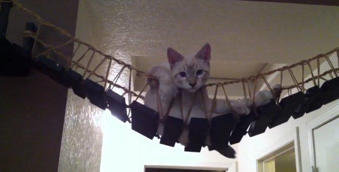 吊り橋と言うよりハンモック…優雅なひと時を過ごす猫