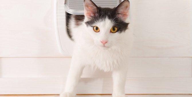 猫用の扉「キャットドア」のDIYと簡単取り付け方法