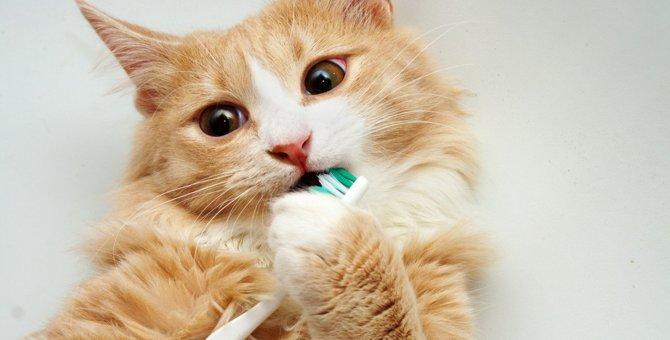 猫に歯磨きは必要?『デンタルケア』のメリット3つと嫌がる猫への対処法