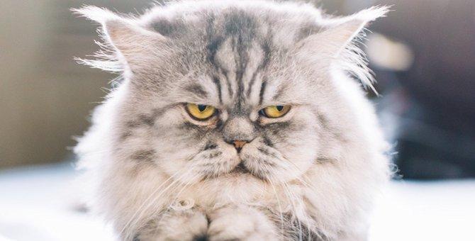 猫がいじけている時にする行動4つ