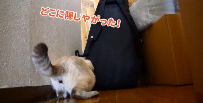 突然やってくる猫の『飽き』に驚きが隠せない