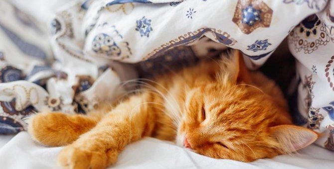 猫にとって快適な部屋作りにおける8つのポイント