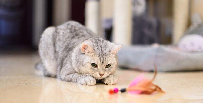 猫が遊ばない4つの理由と気をつけるべき事