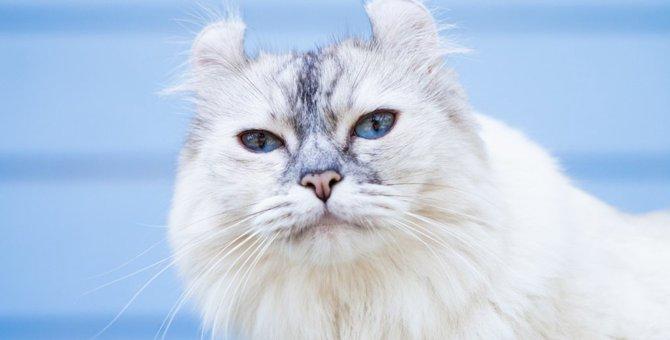 Laylaの12猫占い 12/2~12/8までのあなたと猫ちゃんの運勢
