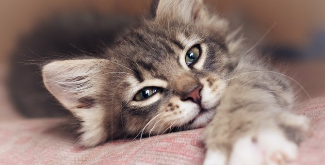 猫が布団を占領する理由とその対処法