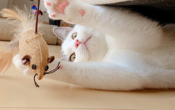 【100均】猫が喜ぶ最強コスパのおもちゃ3つ
