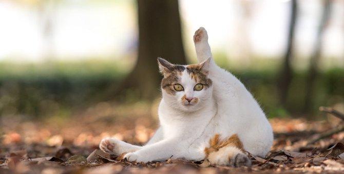 猫が『うっかり』しちゃう8つのこと