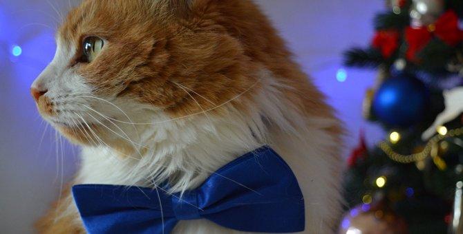 驚愕の年収も!世界の優雅な『セレブ猫』3選