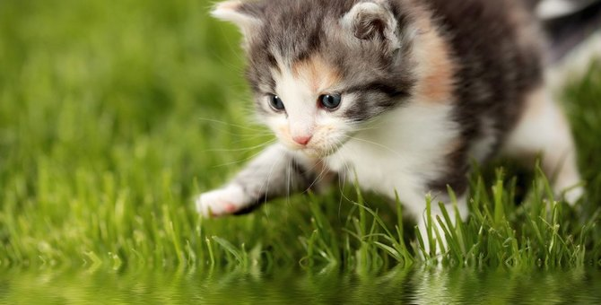 濡れるのが嫌いなのになぜ?…猫が水周りに集まる8つの心理