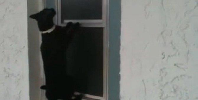 猫ちゃん、スライドの窓を自力で開けて「今帰ったにゃ♪」