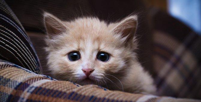ドキドキ…猫が緊張してしまうこと3つ