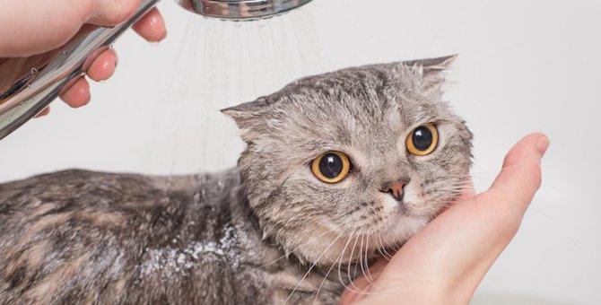 猫をお風呂に入れる必要はある?入れ方やシャンプーのコツなど