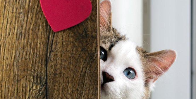 愛猫との相性は?猫とのラブラブ度が分かる11つのチェック項目