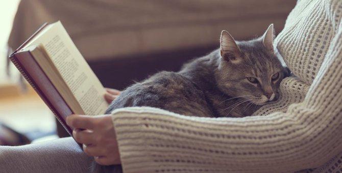 猫が赤ちゃん返り?その行動と対処法3つ