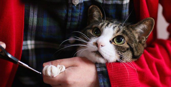 猫の爪切りは人間用の物を使っても切れる!使い方や注意点