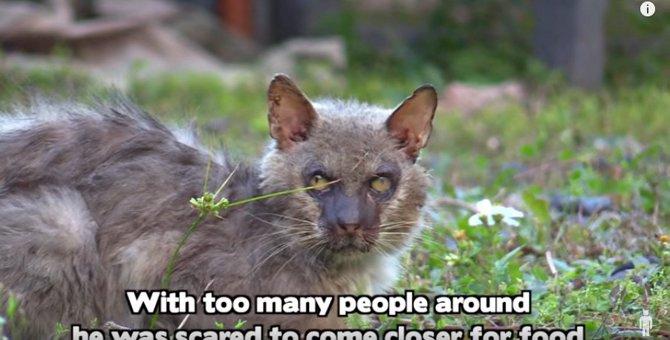 ネグレクトの結果か…爪が食い込んでうまく歩けない猫を保護