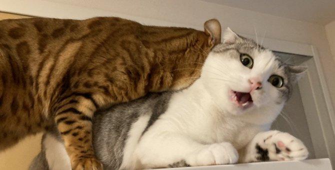 『イテッ』表情がすべてを物語っている猫さんが大人気♡