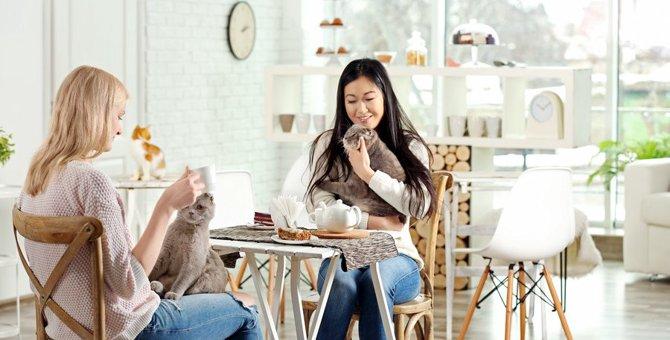 初めての猫カフェで失敗しがちな『NG行動』3つ