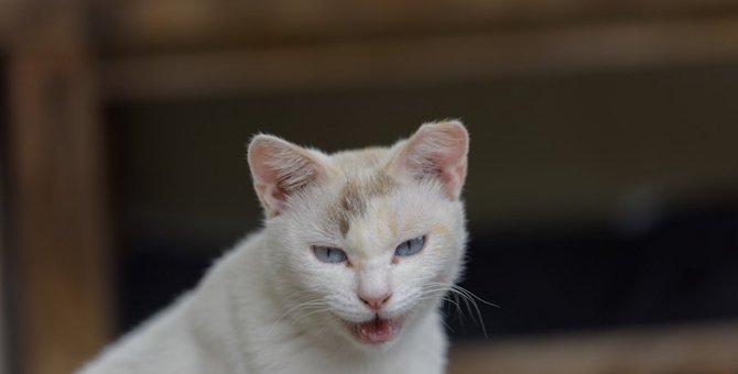 野良猫は日々戦っている!外にいる猫を襲う災い8つ