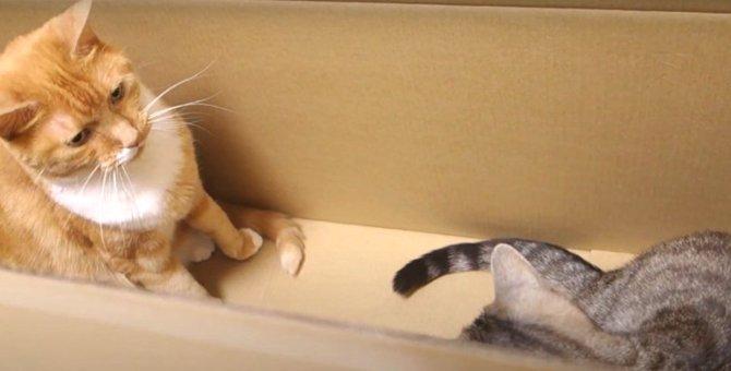 大きなダンボールで気も大きくなってしまった猫ちゃん!?