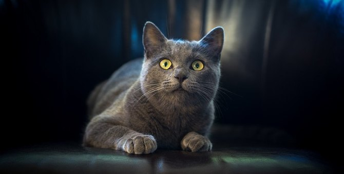 不安を感じている猫の特徴5つ