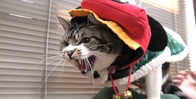 獅子舞スタイルで動物病院へ!緊張してちょっとだけ怒っちゃう猫ちゃん