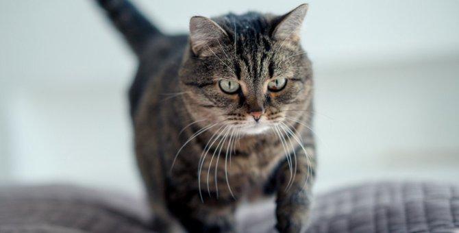 猫が布団を『ほりほり』する4つの理由