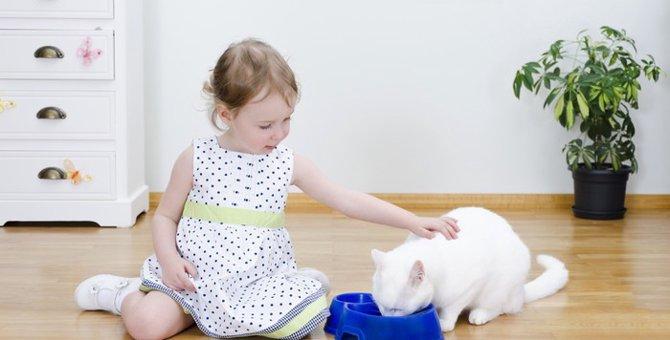 子猫のキャットフードの選び方