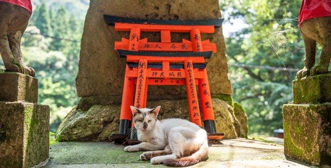 京都の猫スポット6選!神社や野良猫と触れ合える所