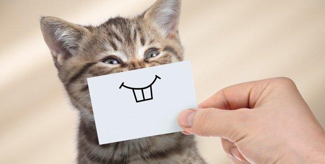 愛猫のデンタルケアできていますか?簡単ケア方法4つ