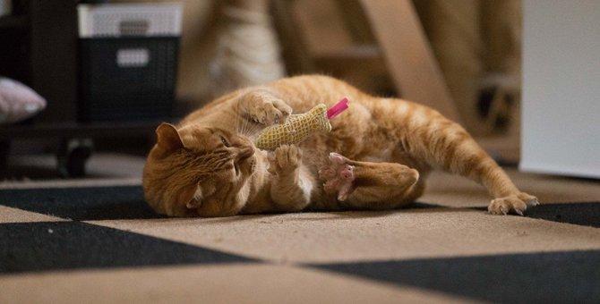 猫はなぜまたたびに反応する?メロメロにする成分や与え方、注意点まで