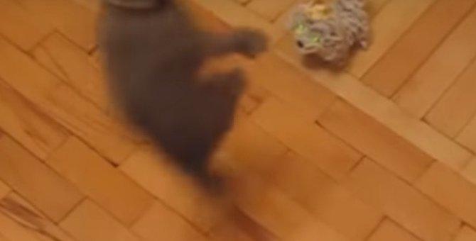 どうだ!参ったか!子猫の必殺技が炸裂した瞬間
