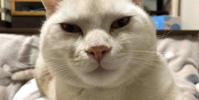 猫が通りすがりに寝ている飼い主を踏んでいく心理
