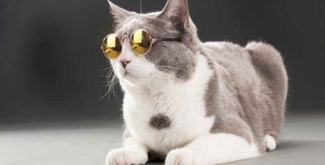 猫のメガネ!おしゃれでカワイイおすすめ商品3選!特徴や選び方とは
