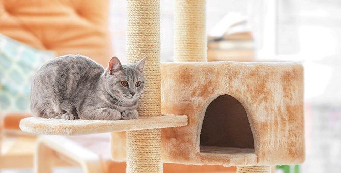 猫がひとりになると鳴くのはなぜ?対処法もご紹介します!