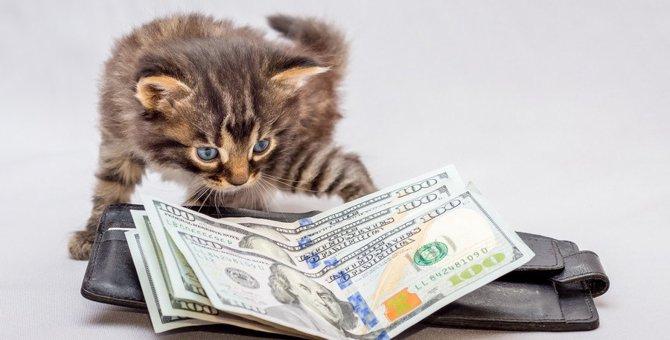 猫モチーフの財布があるブランド6選!おすすめ商品もご紹介