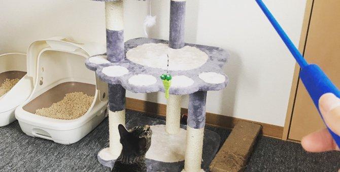 狭いマンション住まいの猫のちゃんストレス解消グッズ!!!!