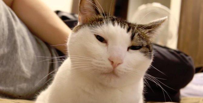 猫を飼いたくなるかも!?優しい猫さんの日常!