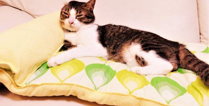 簡単手作り!ゆったりくつろげる枕付き愛猫用ベッド!