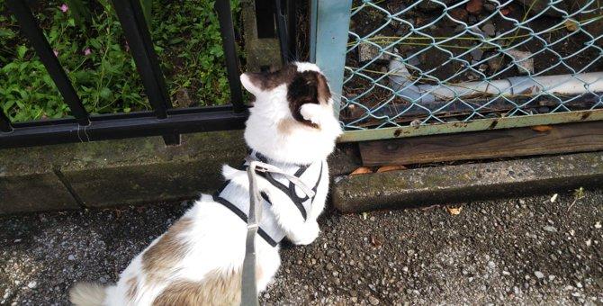 犬と間違える人続出!お散歩中の猫さんの姿が話題に♡