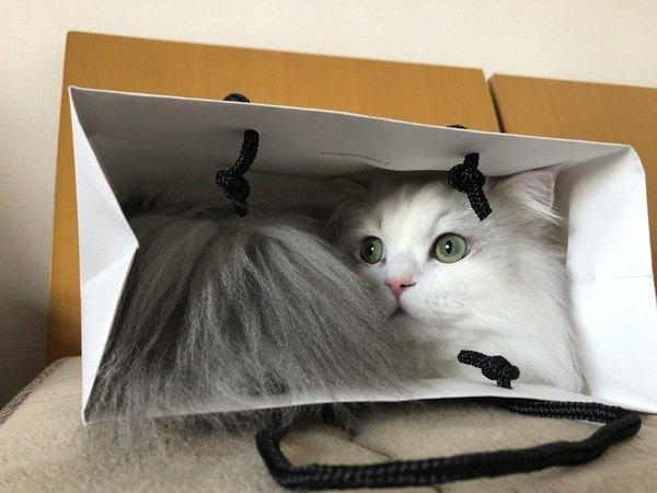 猫が箱以外に入りたがる6つのもの